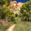 Path through the Calf Creek Canyon — Stock Photo