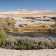 Stock Photo: Bruneau Dunes State Park