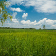 Meadows near the lake Chiemsee — Stock Photo