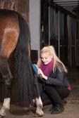 Flicka borstar sin ponny — Stockfoto