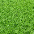 grass textur — Stockfoto #18279693