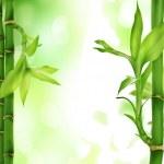 Bamboo — Stock Photo #18341129