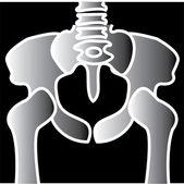 Xray Of A Pelvis Clipart Illustration — Stock Vector