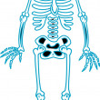 Stock Vector: Skeleton clip art