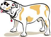 Bulldog standing in profile — Stock Vector