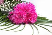 Floral bouquet of dahlia — Stock Photo