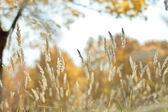 Vicino erba secca — Foto Stock
