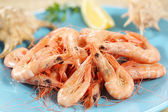 Fresh boiled prawns from portuguese coast — Stockfoto