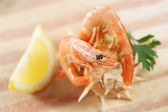 Two prawns on a shell - shallow — Stock Photo