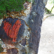 Love concept-heart in a tree - Stock Photo