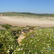 Amoreira beach in South-West Alentejo - 图库照片