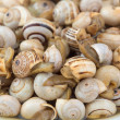 Seasoned boiled snails - traditional dish from Southern Europe — Stock Photo #26511231