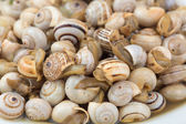 Seasoned boiled snails - traditional dish from Southern Europe — Stock Photo
