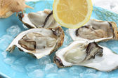 Very fresh light steamed oysters on ice — Stock Photo