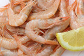 Vey fresh prawns (light pink natural color) from atlantic ocean — Stock Photo