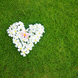 White heart from balinese flowers on green grass — Stock Photo #19926235