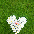 White heart from balinese flowers on green grass — Stock Photo #19926245