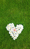 White heart from balinese flowers on green grass — Stock Photo