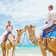 Wedding camel ride — Stock Photo