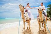 Paseo en camello de diversión — Foto de Stock