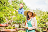 Couple of young gardeners with bonsai — Stock Photo