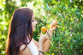 Woman picking oranges — Stock Photo