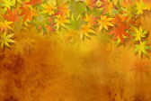 Fall leaves - autumn background — Stock Photo