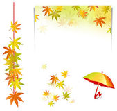 Fall leaves - autumn elements — Stock Vector
