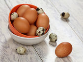 Kuře a křepelčí vejce — Stock fotografie
