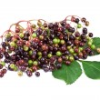 Elderberry with green leafs, isolated on white background — Stock Photo