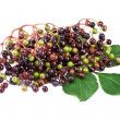 Stock Photo: Elderberry with green leafs, isolated on white background