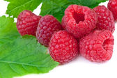 Close up of raspberries with leaves on white background — Stock Photo