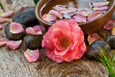 Spa concept. pink flower with zen pebbles — Stock Photo