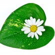 Stock Photo: Spconcept, white flower with green leaf