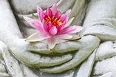Buddha hands holding flower — Stock Photo