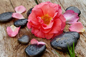 Rose flower and zen stones — Stock fotografie