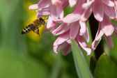 Spring flower and bee — Stock Photo