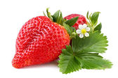 Strawberry with leaf on white — Stock Photo