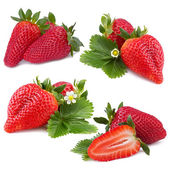 Strawberry collection — Foto de Stock