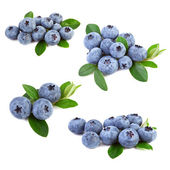 Blueberries collage — Stock Photo