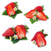 Collection of strawberry isolated on white background — Stock Photo