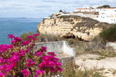 Algarve Scenery with pink Flowers in the Foreground, focus on the foreground — Stock Photo