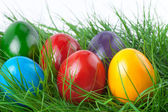 Colorful Easter Eggs on Green Grass — Stock Photo