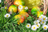 Easter Eggs hidden in Green Grass with Flowers — Stock Photo