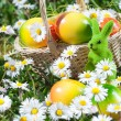 Easter Bunny with Easter Egg on the Flowers Field — Stock Photo #43637679