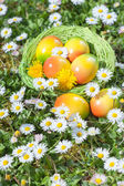 Easter Egg in Basket with Flowers — Stock Photo