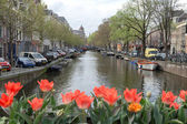 Amsterdam canal scene with tulips flowers in the foreground — Stock Photo