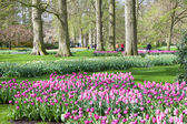 Keukenhof Flower Garden in Lisse, Netherlands — Foto Stock