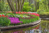 Blooming flowers in a park with a pond — Foto Stock
