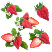 Strawberry Collection — Stock Photo